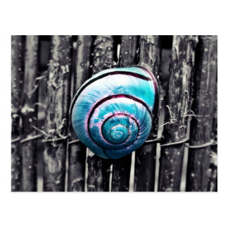 Turquoise snail shell art postcard