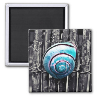 Turquoise snail shell art square magnet