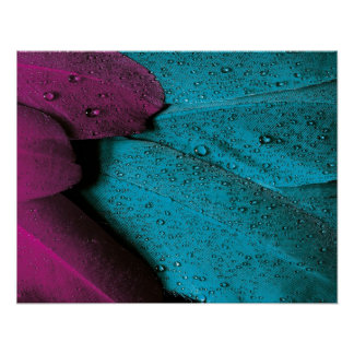 Turquoise Violet Feather Poster