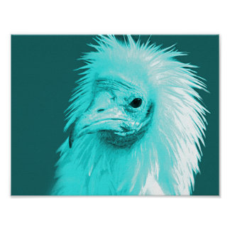 Turquoise World Egyptian Vulture Poster