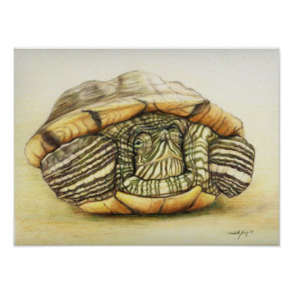 """Turtle"" Art Reproduction Print Poster"
