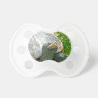 turtle baby pacifiers