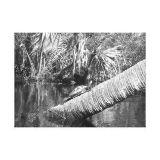 turtle balancing on a log above river canvas print