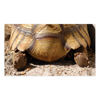 Turtle Butt Bookmark & Gift Tags Business Card