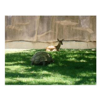 Turtle Chaser Postcard