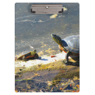 Turtle Clipboard