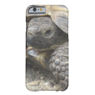 Turtle Close Up Cell Phone Case