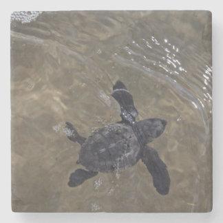 Turtle hatchlings 2 stone coaster