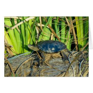 Turtle in the Sun Greeting Card