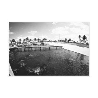 Turtle Lagoon Canvas Print