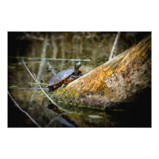 Turtle Log Photo Print