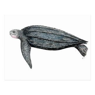 Turtle lute postcard