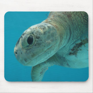 turtle mouse pad