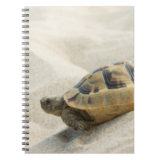 Turtle Notebooks