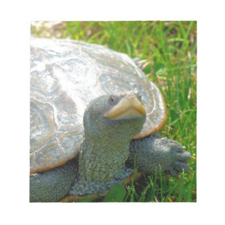 turtle notepad