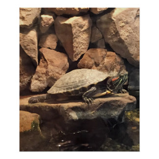 Turtle on a Rock Poster