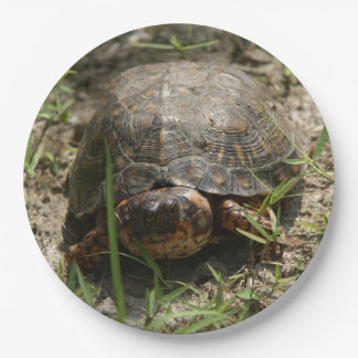 Turtle, Paper Plates. Paper Plate