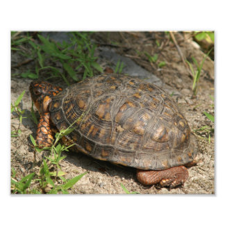Turtle, Photo Enlargement.