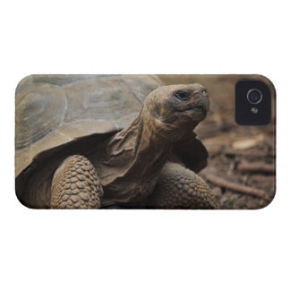 Turtle photo iPhone 4 Case-Mate case