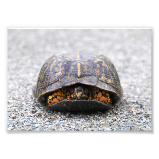 Turtle Photo Print