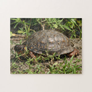 Turtle, Photo Puzzle. Jigsaw Puzzle