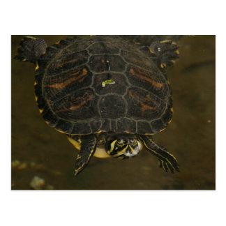 Turtle Pond Postcard