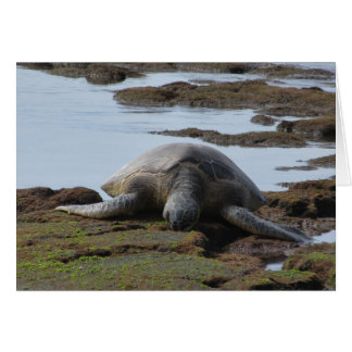 Turtle Resting On The Rocks Card
