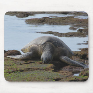 Turtle Resting On The Warm Rocks Mouse Pad