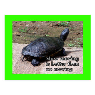 turtle slow Postcard