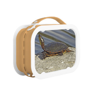 TURTLE SUNNING ON ROCK, STRETCHING NECK LUNCH BOXES
