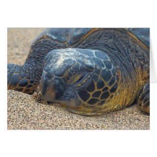 Turtle Up Close Card