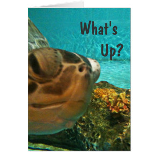 Turtle What's Up Selfie Card
