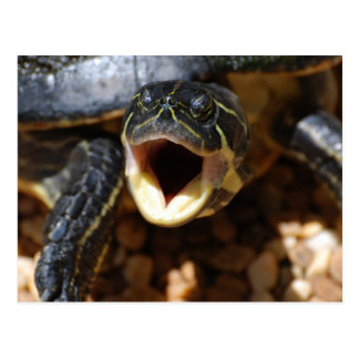 Turtle with Mouth Open Postcards