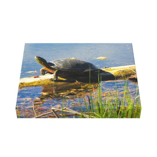 Turtle Wrapped Canvas