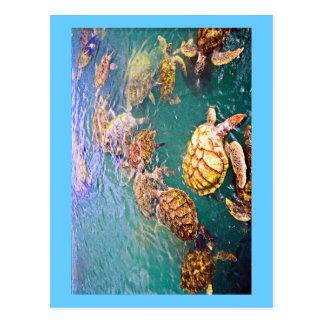 Turtles at Play Postcard