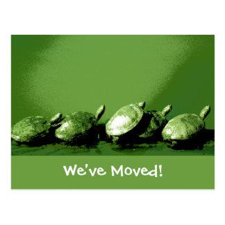 Turtles Change of Address Postcard
