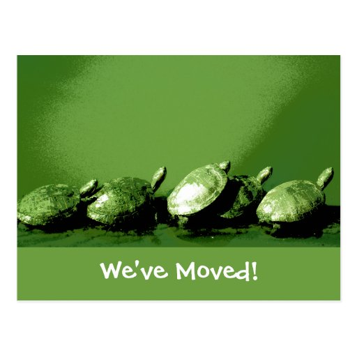 Turtles Change of Address Postcards