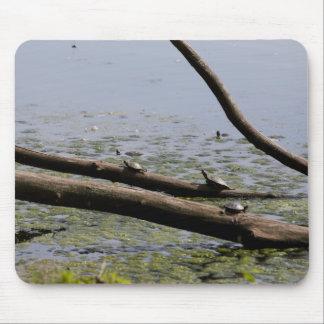 Turtles II Mouse Pad