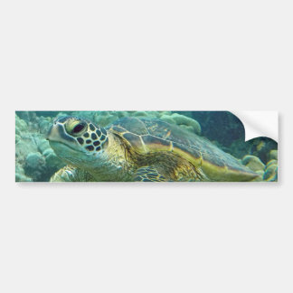 Turtles in Hawaii Bumper Sticker