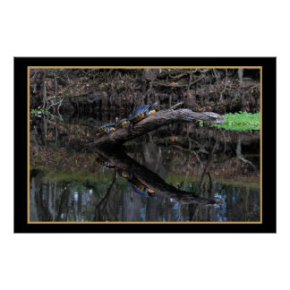 Turtles On Santa Fe River 520 Poster