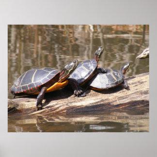 Turtles Sitting On Log Poster