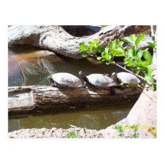 TURTLES, TURTLES, TURTLES!!! POSTCARD