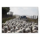 tuscany farmland road, car blocked by herd of card