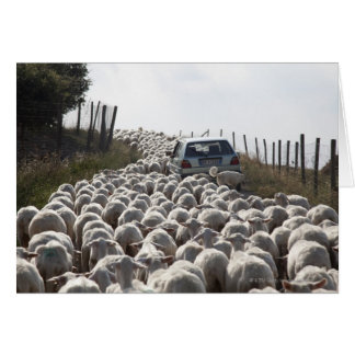 tuscany farmland road, car blocked by herd of card