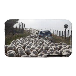 tuscany farmland road, car blocked by herd of iPhone 3 cases