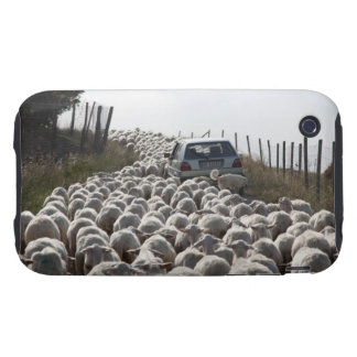 tuscany farmland road, car blocked by herd of iPhone 3 tough cases