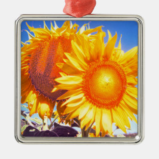 tuscany sunflower2.jpg Silver-Colored square ornament