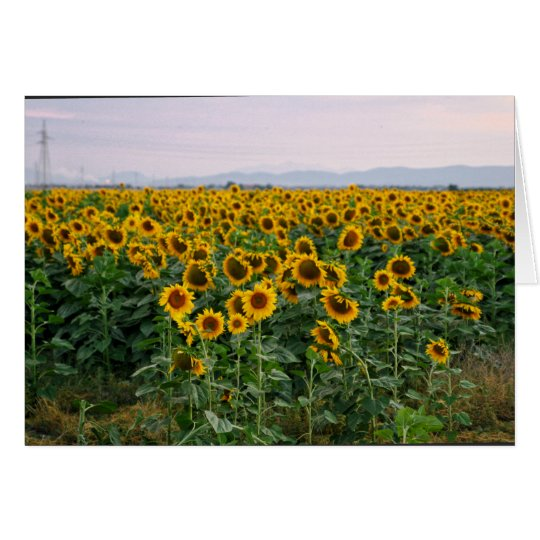 Tuscany Sunflowers Card