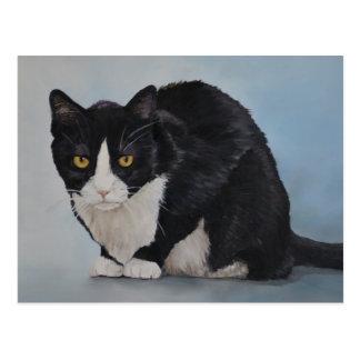 Tuxedo Black White Domestic Shorthair Cat Postcard