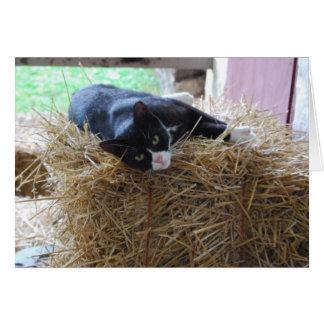 Tuxedo Cat Blank Card